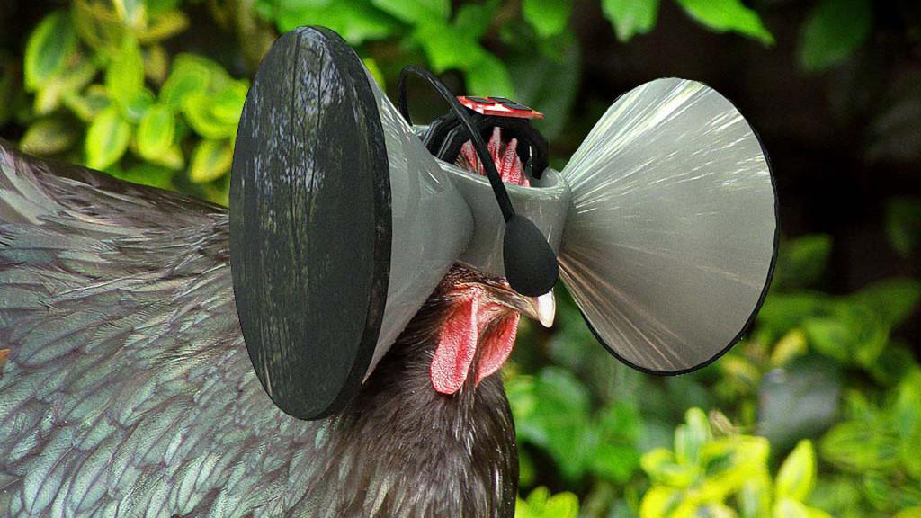 Virtual Reality poultry
